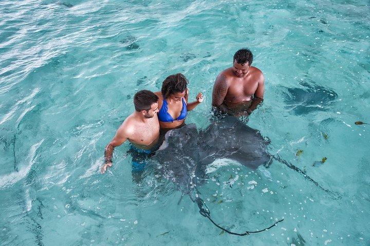 Best tours in Bora Bora - Swimming with Sharks & Stingrays