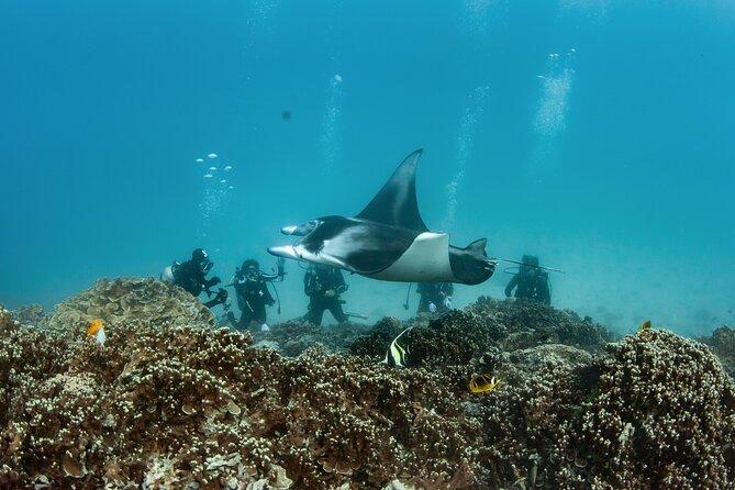 Best tours in Bora Bora - Scuba Diving